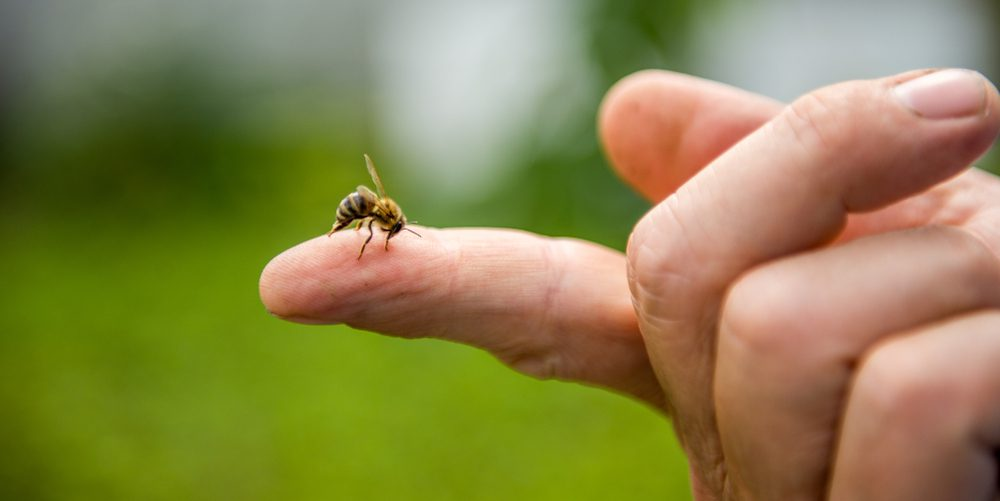 the bee stings the person in the finger.