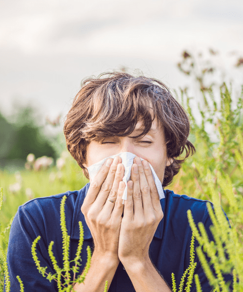 Pigweed Allergy